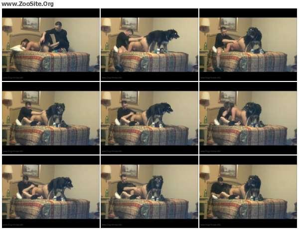 e6c732605970223 - Threesome Dog Porn - Dog Porn Video